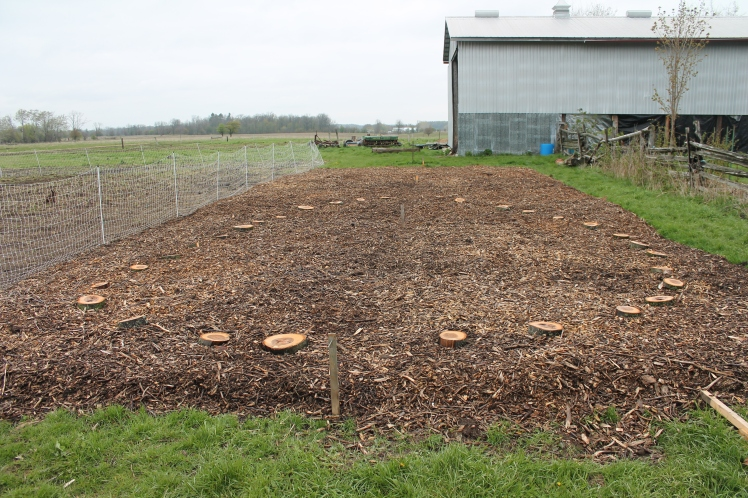 Laying out paths in the sheet mulched garden